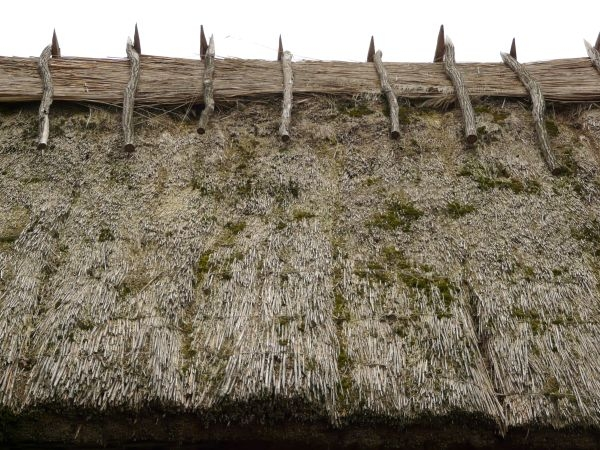 Roof of thatched, dry straw material