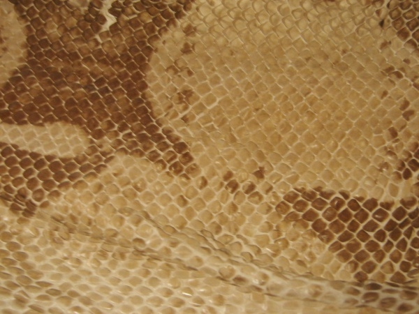 Scaly Snake Skin Texture