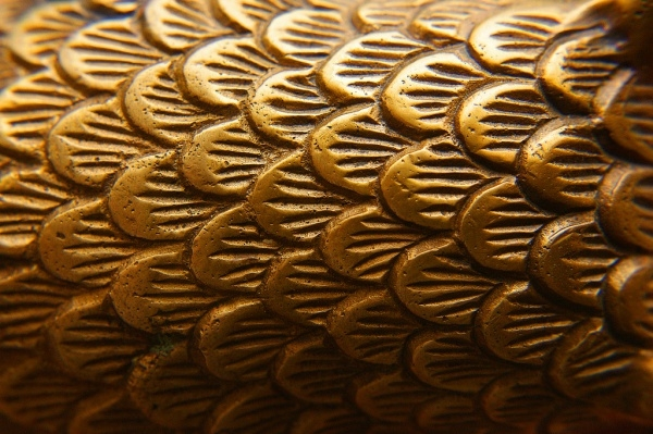 Download Brass Feather Texture
