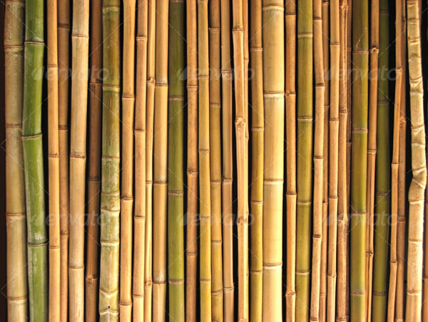 Abstract Bamboo Seamless pattern