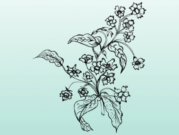 Artistic Floral Sketch Illustration