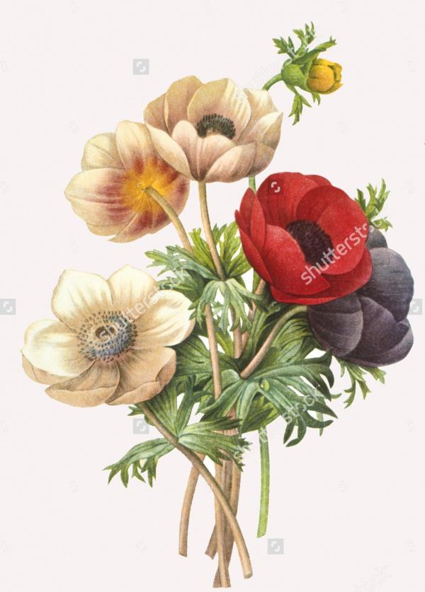 Clip Art Flower Illustration