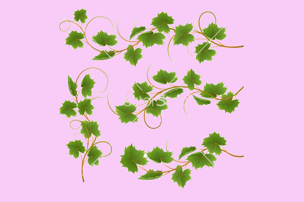 Creative Green Vine Vector