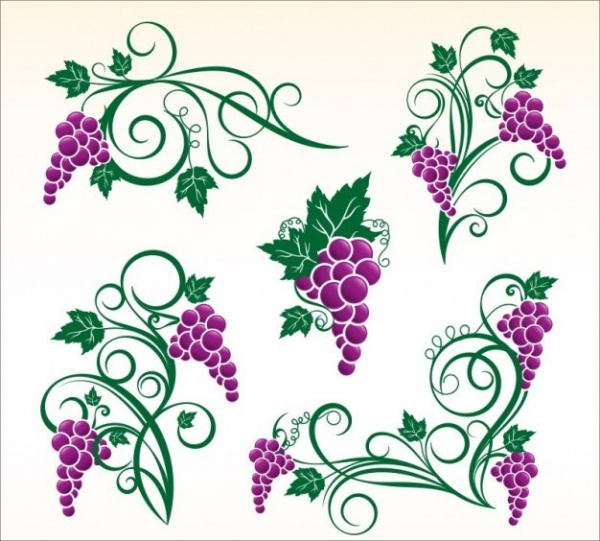 Grapevine Ornaments Fruit Vectors