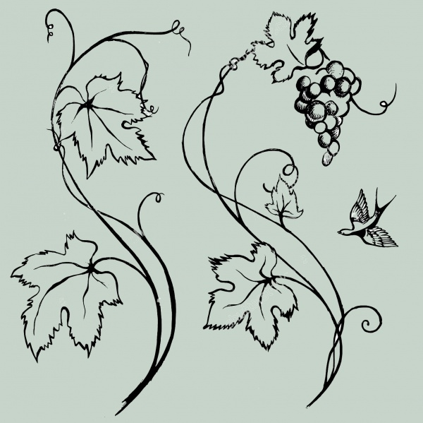 Hand Drawn Vine Vector