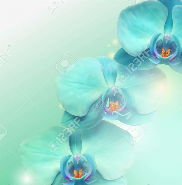 High Quality Flower Illustration