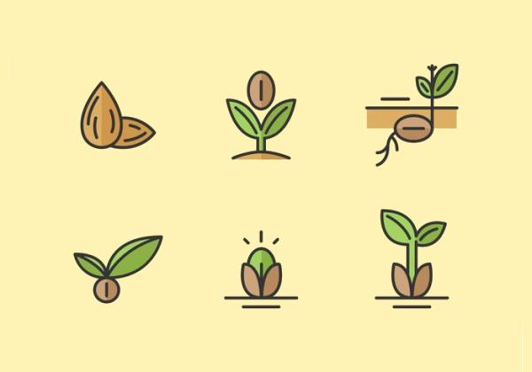 minimal seed vector icons1