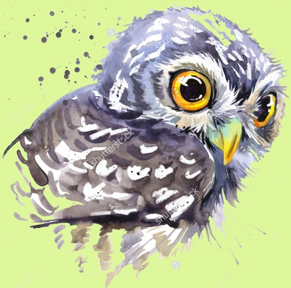 Owl Watercolor Splash Illustration