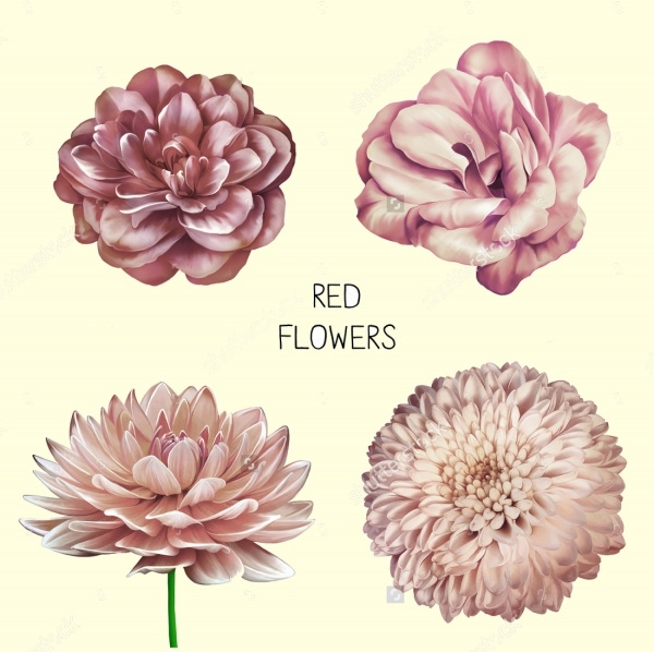 pastel flower vector illustration