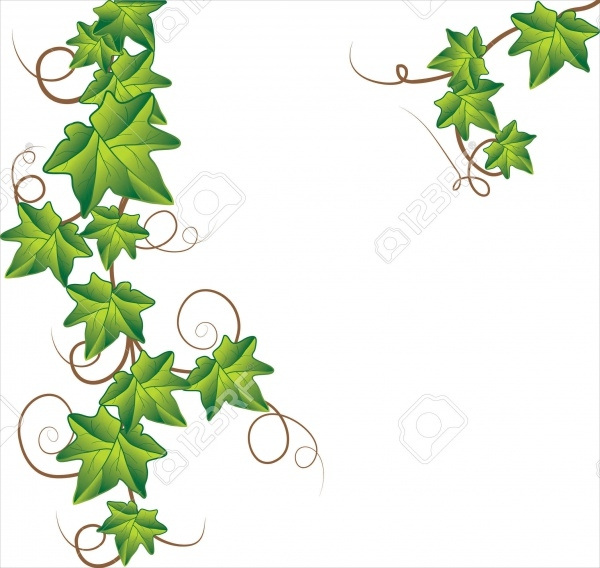 Simple Ivy Vine Vector