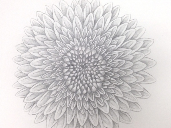 Sketchy Hand Flower Illustration