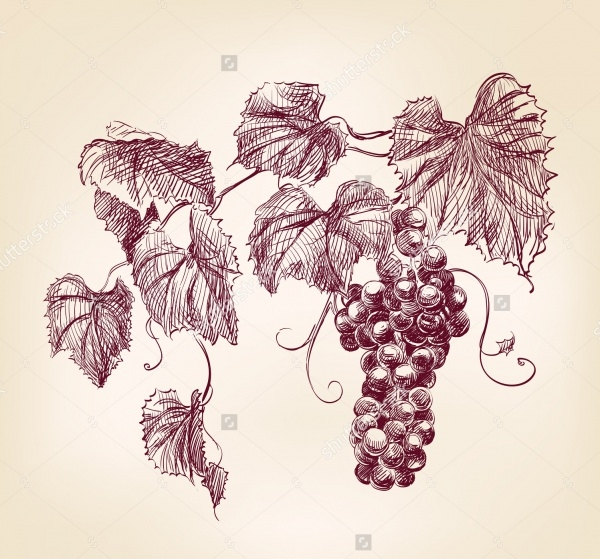 Vintage Vine Vector Illustartion