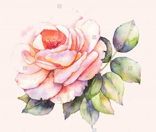 Abstract Rose Watercolor Illustration