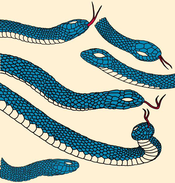 Amazing Snake Vector Pack