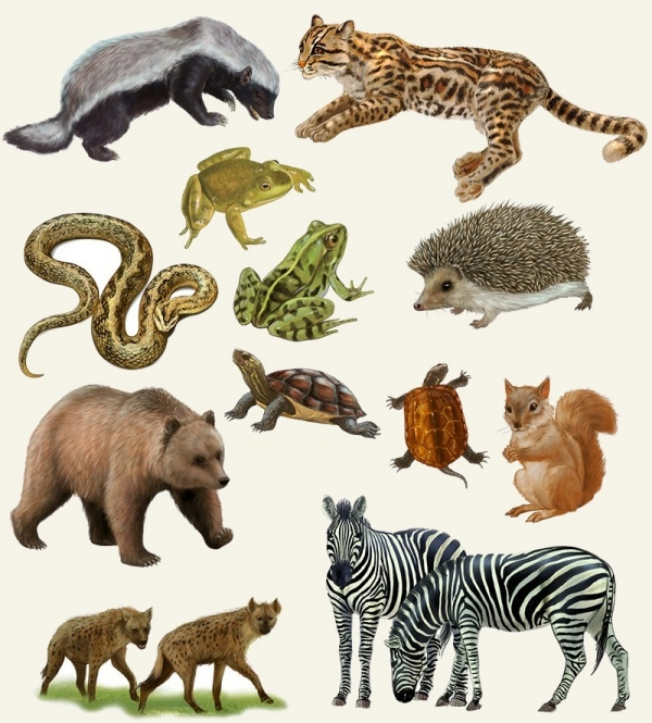 Animal Illustration For Desktop