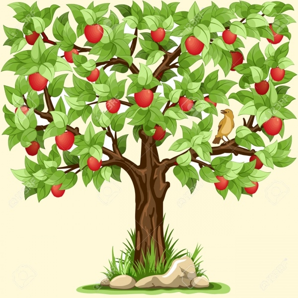 Apple Tree Illustration