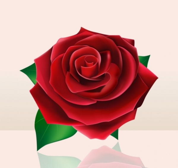 Beautiful PAssionate red rose Illustration