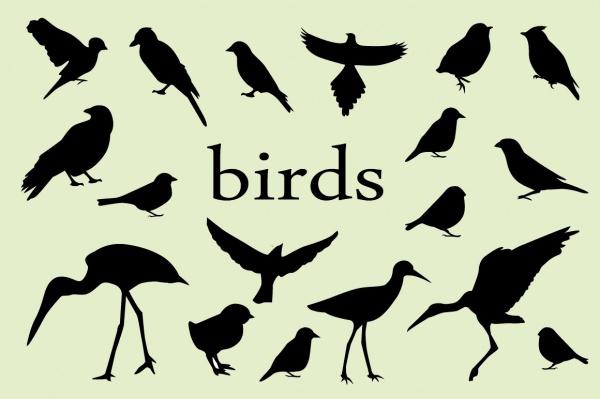 Bird Silhouettes Vectors