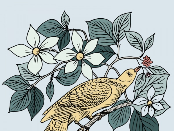 Botanical Bird Illustration pastel Design