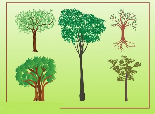 Ecological Deciduous trees Illustration