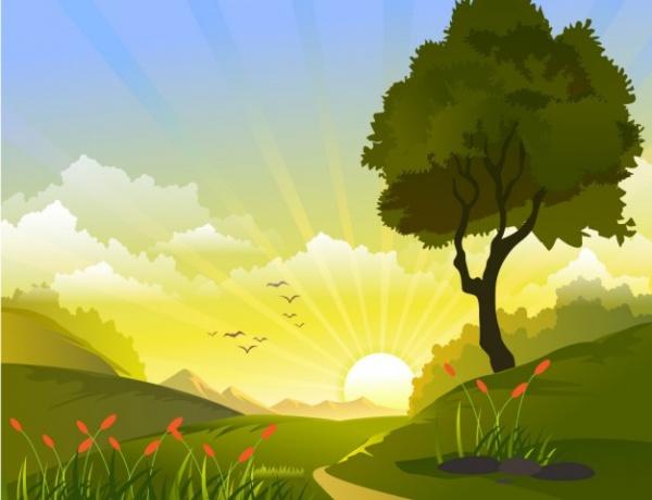 Field Landscape Illustration
