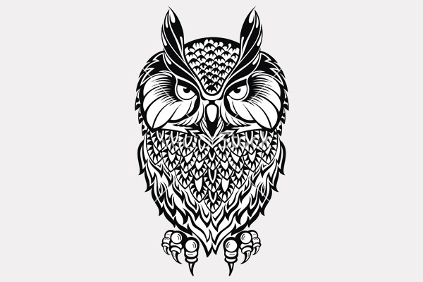 High Resolution Owl vector