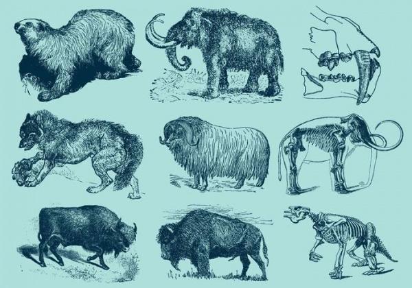 Ice Age Animals Illustrations