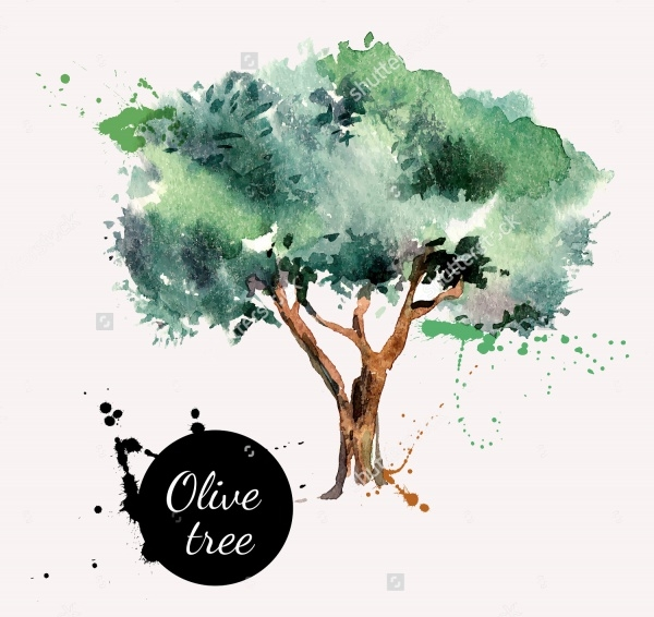 Olive Tree Vector Illustration