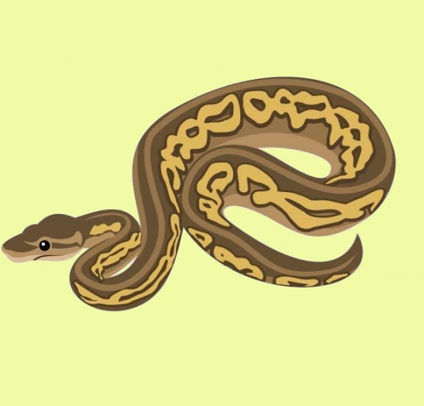 Python Snake vector Graphic