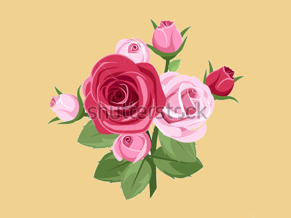 Red & Pink Rose Vector Illustration