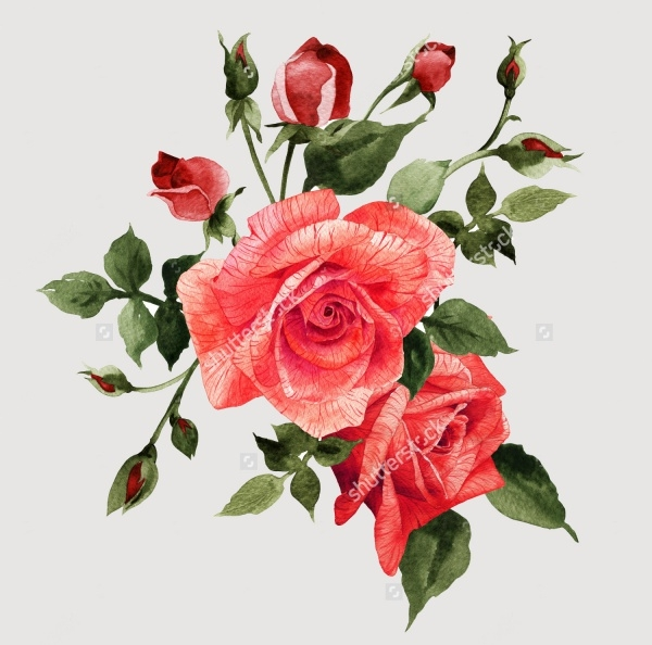 Rose Bouquet Illustration