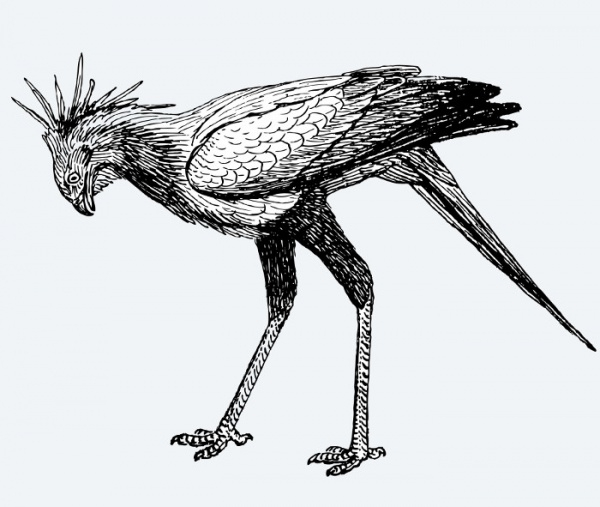 Secretary Bird Illustration Clipart