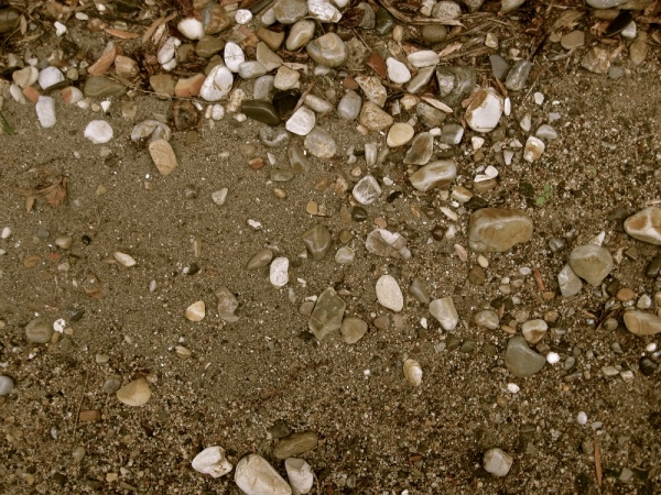 Shell Beach Texture For Free