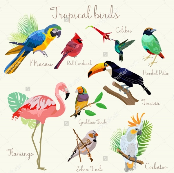 Tropical Bird Vector Illustration of Bird