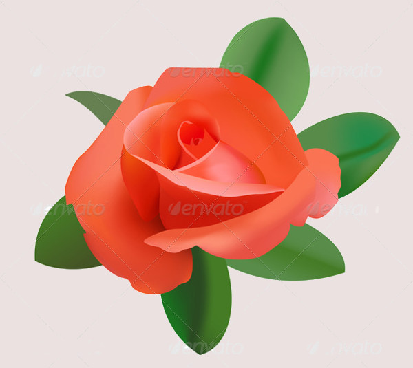 Vector Illustration of Red Rose