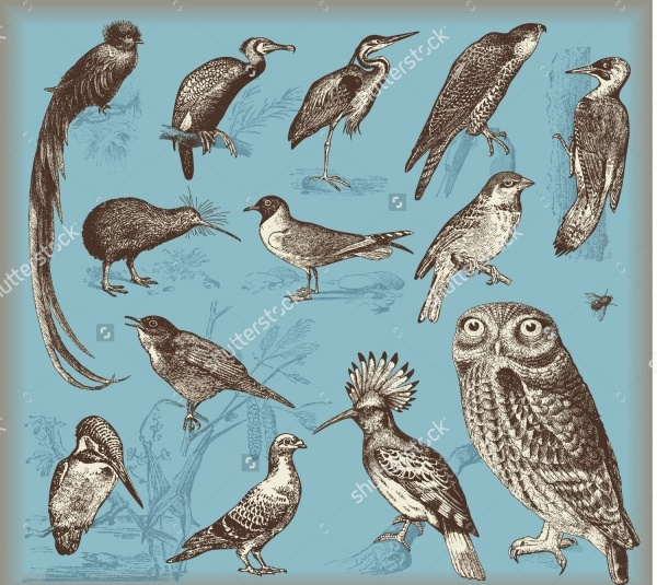 Vintage Bird Line Art Illustration