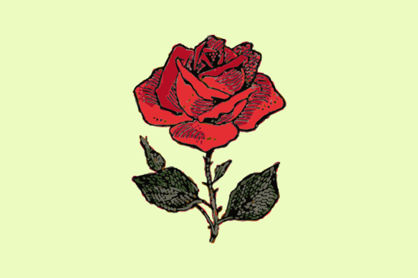 Rose Illustration with Color Clipart