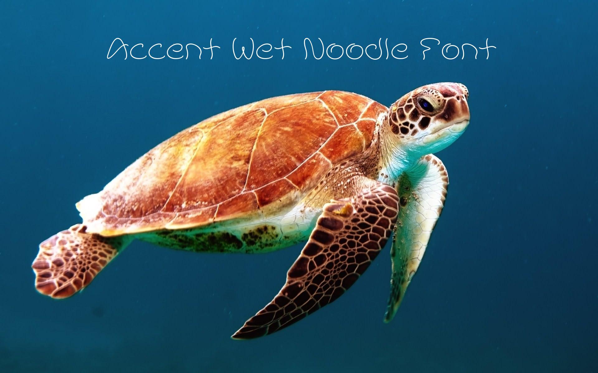 Accent Wet Noodle Font