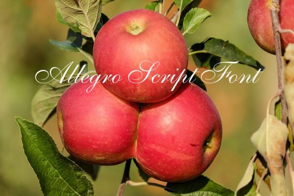 Allegro Script Font