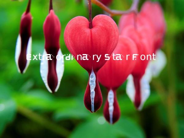 Extraordinary Star Font
