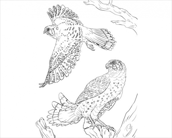 Free Bird Coloring Page for Adults