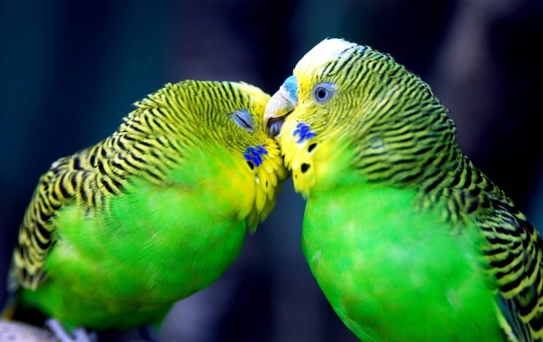 free bird desktop wallpaper