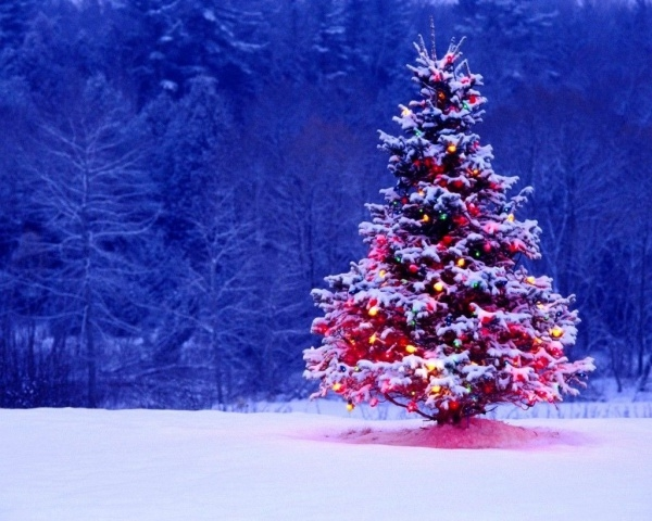 Free Christmas Tree Wallpaper