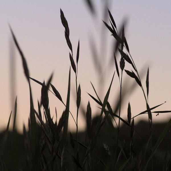 free-grass-silhouettes-design