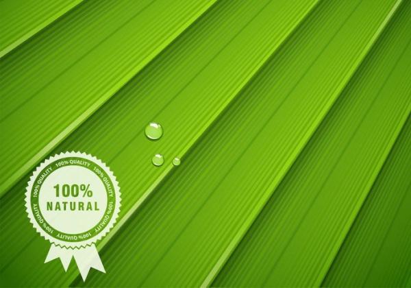 Free Leaf Texture Design