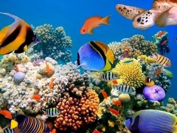 Free Live Fish Wallpaper