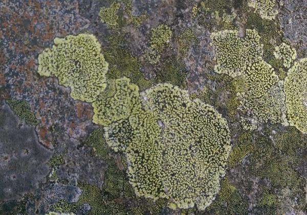 Free Mountain Stone Texture Design