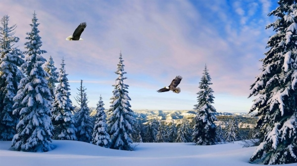 free-winter-wallpapers-for-desktop