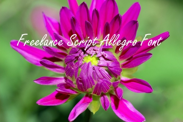 Freelance Script Allegro Font