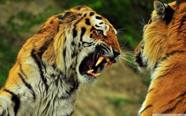 Royalty Free Animal Image